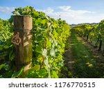 beautiful view of the vineyards ... | Shutterstock . vector #1176770515