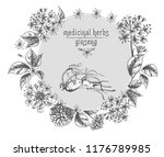 realistic botanical ink sketch...   Shutterstock .eps vector #1176789985