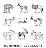 African Wild Antelope  Deer Or...