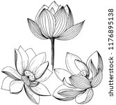 vector lotus flower. floral... | Shutterstock .eps vector #1176895138
