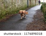 morning walk with dog in winter ... | Shutterstock . vector #1176898318