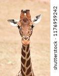 reticulated giraffe  giraffa... | Shutterstock . vector #1176959242