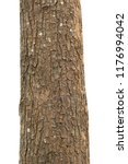 tree trunk isolated on white... | Shutterstock . vector #1176994042