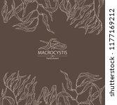 background with macrocystis ... | Shutterstock .eps vector #1177169212