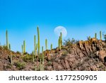 The moon rises in a blue sky above a rocky mountain ridge covered in saguaro cacti and other varieties of cactus found on the Sonoran desert landscape outside of Tucson, Arizona. Winter 2018.