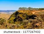 cerrado brazilian vegetation   Shutterstock . vector #1177267432