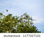 the egret perched on tree size. | Shutterstock . vector #1177327132