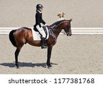 young elegant rider woman and... | Shutterstock . vector #1177381768