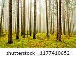 forest trees fog autumn...   Shutterstock . vector #1177410652