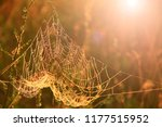 big cowweb among blades in... | Shutterstock . vector #1177515952