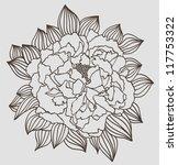 peony flower | Shutterstock .eps vector #117753322