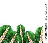 leaves of houseplant maranta... | Shutterstock . vector #1177612615