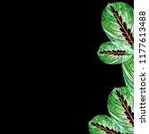leaves of houseplant maranta... | Shutterstock . vector #1177613488