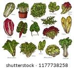 vegetarian salads and lettuce...   Shutterstock .eps vector #1177738258