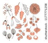vector set witn fall plants on... | Shutterstock .eps vector #1177771258