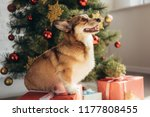 cute furry dog sitting on gift... | Shutterstock . vector #1177808455