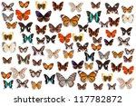 Stock photo butterflies 117782872