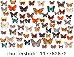 butterflies | Shutterstock . vector #117782872