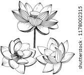 lotus flower. floral botanical ... | Shutterstock . vector #1178002315