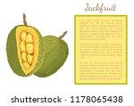 jackfruit exotic juicy stone... | Shutterstock .eps vector #1178065438