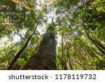 an upward view to the trees of... | Shutterstock . vector #1178119732