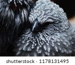 a captivating closeup of... | Shutterstock . vector #1178131495