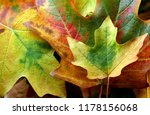fall leaves of different colors ... | Shutterstock . vector #1178156068