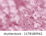 close up of lilac blossoming at ... | Shutterstock . vector #1178180962