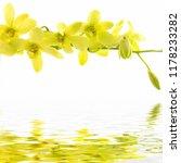 background of yellow flower of... | Shutterstock . vector #1178233282