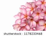 bouquet of pink hydrangea   | Shutterstock . vector #1178233468