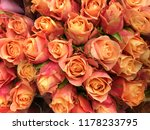 close up bouquet of fresh rose... | Shutterstock . vector #1178233795