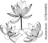 vector lotus flower. floral... | Shutterstock .eps vector #1178244892