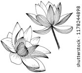 vector lotus flower. floral... | Shutterstock .eps vector #1178244898