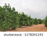 spanish orange grove  valencia | Shutterstock . vector #1178341192