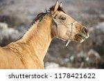 Horse Portrait In Snowy...