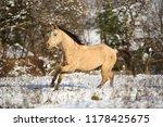 quarter horse stallion running... | Shutterstock . vector #1178425675