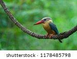 stork billed kingfisher bird ... | Shutterstock . vector #1178485798