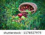 harvest vegetables in the basket   Shutterstock . vector #1178527975