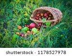harvest vegetables in the basket   Shutterstock . vector #1178527978
