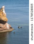 black sea rocks | Shutterstock . vector #1178528005