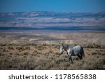 wild  feral  mustang in the... | Shutterstock . vector #1178565838