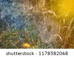 closeup of cobwebs on dry grass ... | Shutterstock . vector #1178582068
