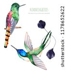 Stock photo watercolor exotic birds collection different species of hummingbirds perfect for wedding 1178652622