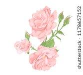 flower pink rose  green leaves. ... | Shutterstock .eps vector #1178657152