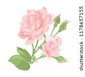flower pink rose  green leaves. ... | Shutterstock .eps vector #1178657155
