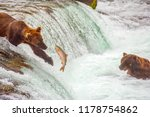 Grizzly Bears Fishing For...