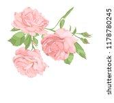flower pink rose  green leaves. ... | Shutterstock .eps vector #1178780245