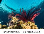 coral reefs and water plants in ... | Shutterstock . vector #1178856115