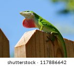 Cute Green Anole Lizard