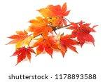 autumn maple leaves | Shutterstock . vector #1178893588